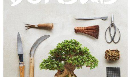 Comment créer et entretenir vos bonsaïs