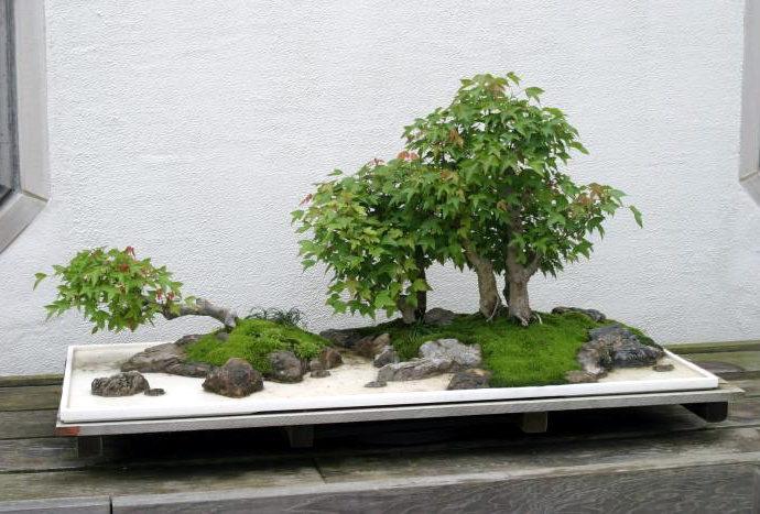 Le bonsaï Bonkei ou Saikei