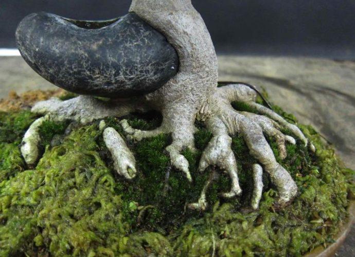 Conseils pour les débutants de l'art du bonsaï : planter et cultiver un bonsaï japonais