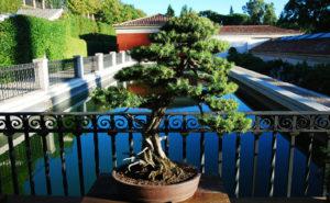 L'art des bonsaïs
