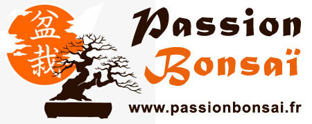 Passion Bonsaï