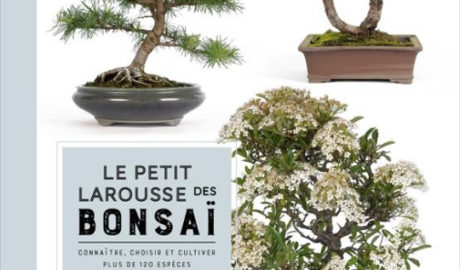 Petit Larousse des bonsaï
