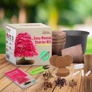 kit de démarrage de graines de Bonsai pour débutants