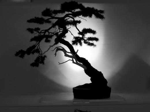 Un bonsaï d'intérieur voyage à travers le temps