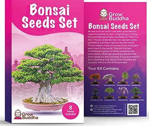 Coffret de graines de bonsaïs par Grow Buddha - Cultivez facilement votre propre bonsaï avec notre coffret de 8 graines de bonsaïs. Niveau débutant à expert
