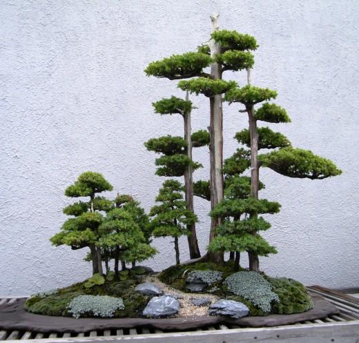 Jardinage Japonais