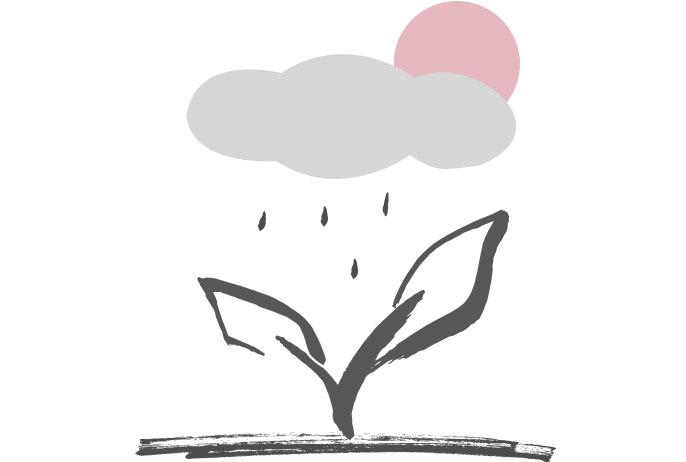 Conseils pour l'arrosage des bonsaïs