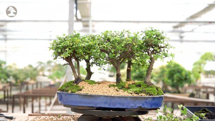 Une introduction au sol des bonsaïs