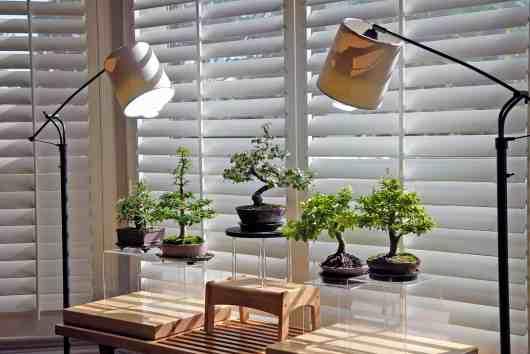 Bonsaïs d'intérieur avec éclairage artificiel