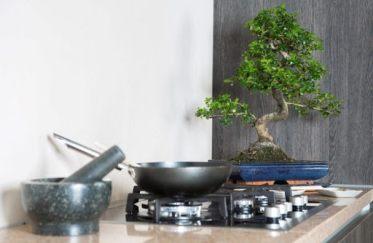 Bonsaïs Ficus d'intérieur dans la cuisine