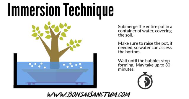 Arrosage de bonsaïs - Technique d'immersion