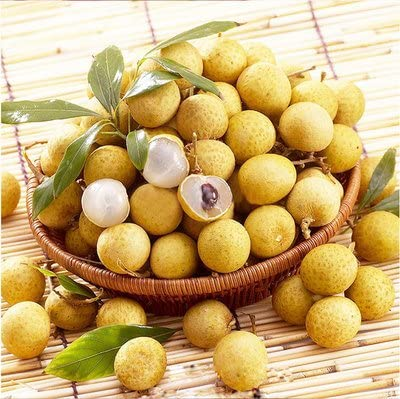 20pcs/bag frais Longan Graines Outdoor Tropical doux Juicy Dimocarpus yeux Bonsai arbres fruitiers pour Potted Décor de jardin
