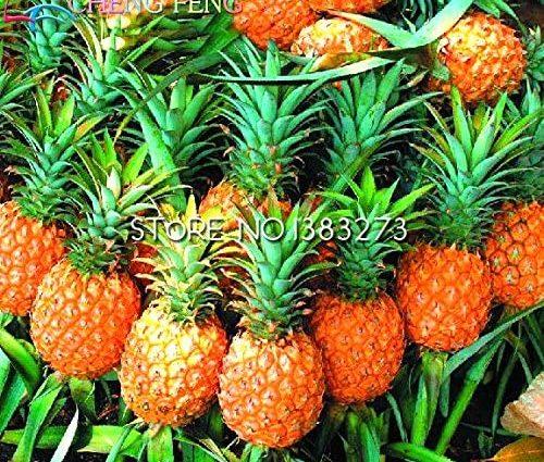 ChinaMarket 100PCS / sac de graines d'ananas nain, graines de fruits délicieux juteux, rare Bonsai plante