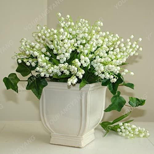 200 pcs/sac Muguet Graines de fleurs de Bell Orchid Seeds Rich Aroma Bonsai Balcon fleurs pour la maison Plantes en pot au chocolat