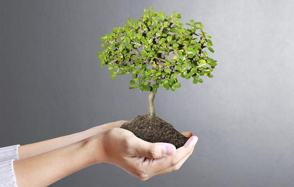 Plantation de vos bonsaïs
