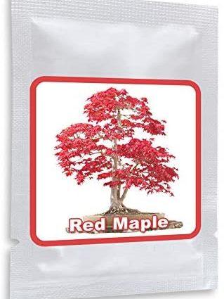 Erable japonais rouge Graines de Bonsaï/env.20 pièces/A.palmatum/cultivable comme bonsaï ou arbre