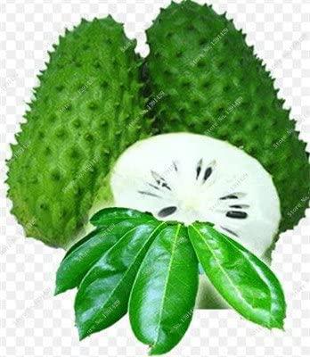Graviola Annona Muricata Corossol Graine Semente De Frutas Tropicais délicieux Annona semences sucre usine Bonsai 10 Pcs 1